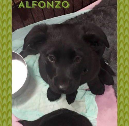 ALFONZO