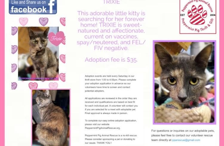 ADOPTABLE CAT OF THE WEEK:: TRIXIE!