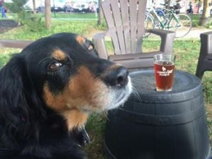 ″She′s a great brewery dog.″