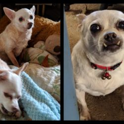 SUCCESS STORY:: CHARLIE, DAISY, and MAIZEY!!
