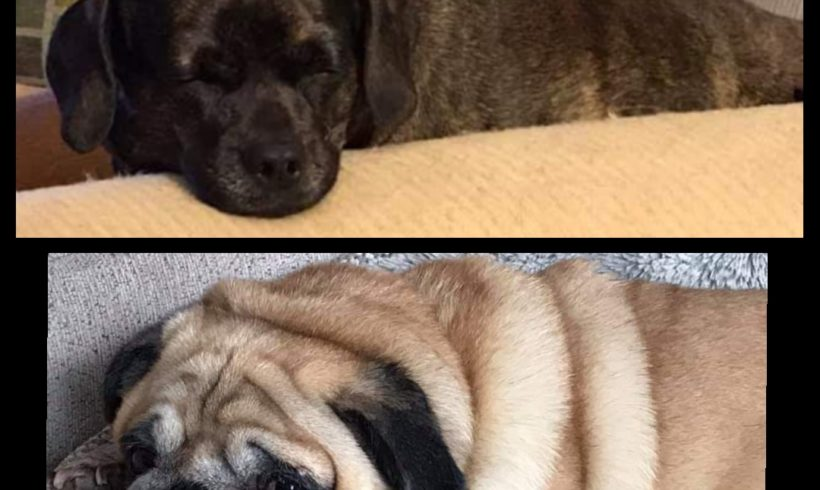 SUCCESS STORY:: MAUDE and MILLIE (fka Puggy Sue)!!