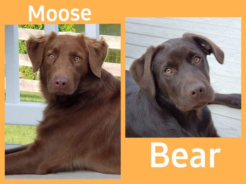 SUCCESS STORY – MOOSE AND BEAR!!